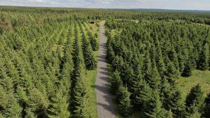 Santa's forest in Rovaniemi, close to Santa Claus Village