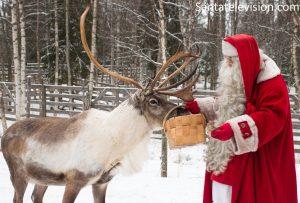 Santa feeding his reindeer at Santa Claus Village in Lapland