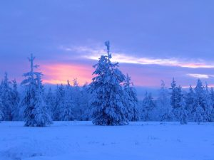 Blue moment in forest in Lapland, Finland