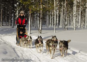 Husky dog safari in Lapland, Finland