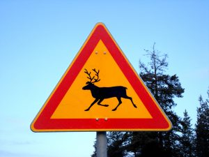 Reindeer warning road sign in Lapland