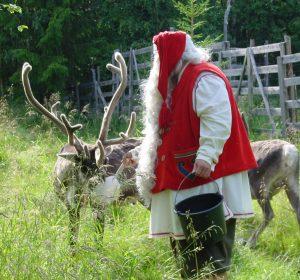 Papá Noel Santa Claus dando de comer a sus renos en Laponia.