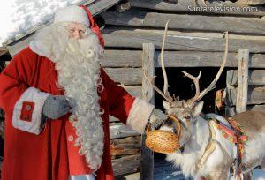 Santa's Reindeer in Lapland: Father Christmas feeding his reindeer