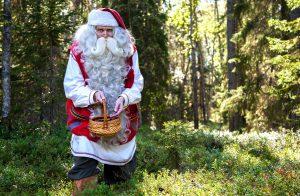 Babbo Natale raccoglie mirtilli in una foresta in Finlandia