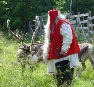 Papá Noel Santa Claus dando de comer a sus renos en la Laponia finlandesa