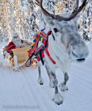 Papá Noel y un reno en Rovaniemi, la ciudad oficial de Santa Claus en Laponia, Finlandia