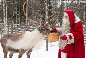 Papá Noel dando de comer a sus renos en la Aldea de Santa Claus en Laponia, Finlandia