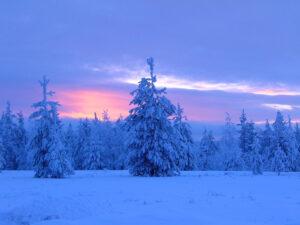 Ambiance bleutée le soir en Laponie finlandaise