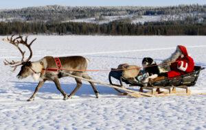 Le Père Noël et son chien font une promenade en renne en Laponie finlandaise