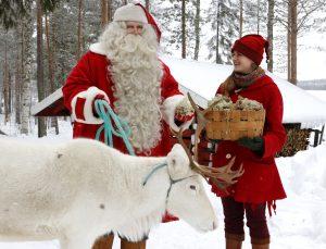 Le Père Noël et son lutin nourrissent un renne avec du lichen en Laponie finlandaise