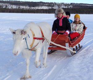 Une promenade avec des rennes à la ferme de rennes de Reindeer Lake Resort, à Pello en Laponie