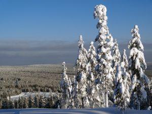 Vue hivernale du haut de la montagne Ritavaara à Pello en Laponie finlandaise
